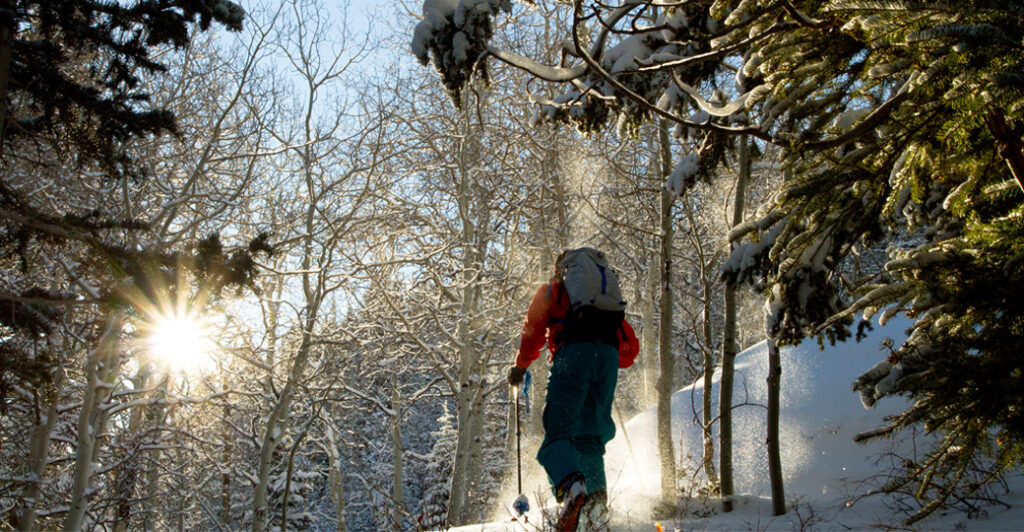 Backcountry skier skinning up through trees